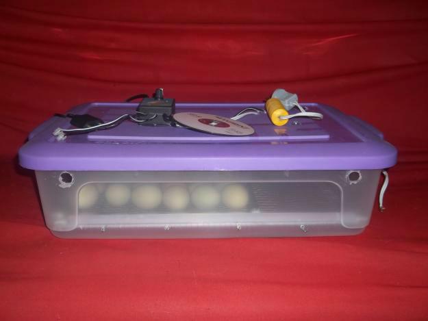 1333159094_299580986_2-Fotos-de--Vendo-chocadeira-30-ovos-com-viragem-e-temperatura-automatica-RJ
